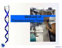Methods of Transformation-Genetic Programming-Lecture Slides