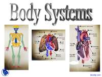 Body Systems Theory - Physical Education - Lecture Slides