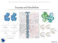 Introduction - Enzymes and Metabolsim - Lecture Slides