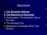 Glycolytic Pathway and Reactions of Glycolysis - Biochemistry - Lecture Slides