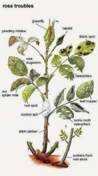Morphological descriptin of some plants